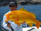 golden-grouper