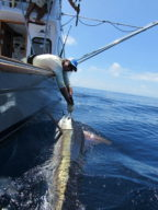 Captain Andy LoCascio - Striped Marlin - 2020
