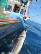 Steve Palmo - Striped Marlin - 2020